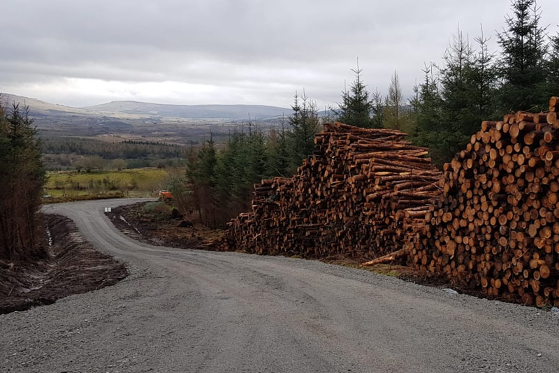 forestry in Ireland